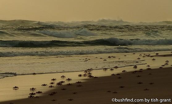 Morning beach