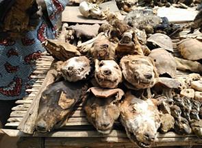 Togo, o mercado de feitiçaria