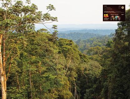Floresta do Maiombe