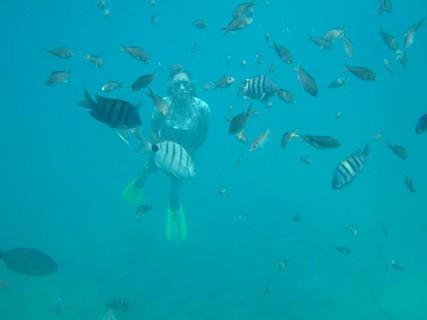No fundo do mar, são visíveis diversos peixes.