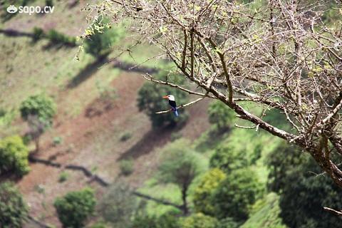 A passarinha é uma das aves que poderá ver durante a viagem.