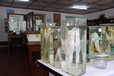 O Museu de Biologia Marinha em Inhaca