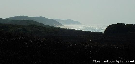 Where bush meets sea