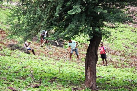 Esta é a altura em que as povoações correm para cultivar a terra.