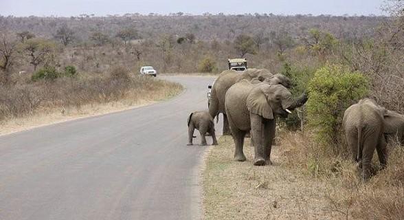 Elefantes - Kruger Park - África do Sul