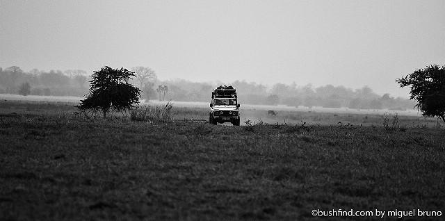 On safariI
