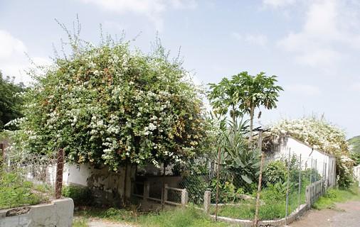 A partir de São Jorge poderá igualmente visitar o Jardim Botânico, único em Cabo Verde.