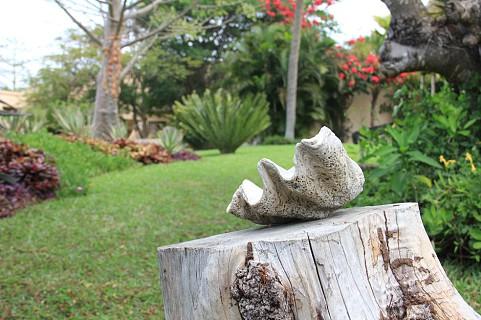 Pormenores do exterior da Casa Rex (SAPO MZ/ Eliana Silva)
