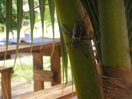 Fauna e Flora de Angola