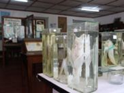 Estação-Museu de Biologia Marítima da Inhaca