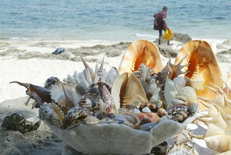 O marisco não serve só para estar à mesa dos moçambicanos, serve também para tudo um pouco