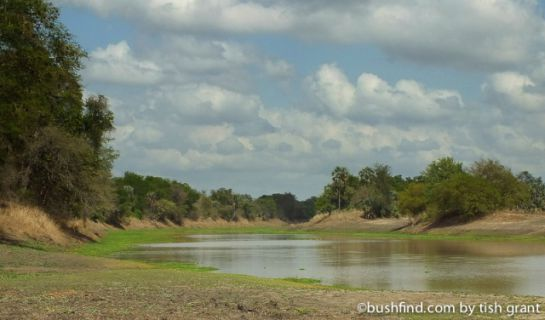 Urema river