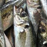 Anulada a interdição da pesca de carapau