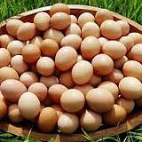 Importação de ovos prejudica a produção nacional