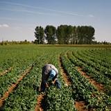 Fazendeiros da Quibala e Cela serão financiados pelo Banco de Desenvolvimento de Angola