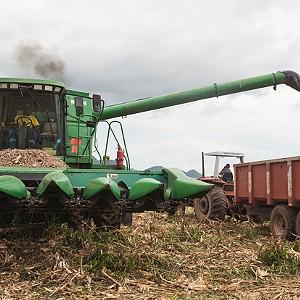 Produtores agrícolas garantem ter capacidade de abastecer o mercado nacional