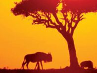África: Um passado glorioso um futuro promissor (II)
