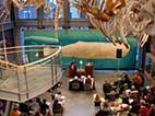 Cabo Verde recebe exposição permanente do Museu da Baleia de New Bedford