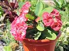 Expositores da feira de plantas ornamentais apelam à adesão dos praienses