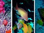 Recife de coral: ver mas não mexer!