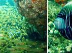 O que são corais?