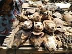 Togo: o mercado de feitiçaria