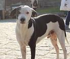Thumbnail artigo Chinho, o cão mais festivaleiro de Portugal