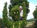 Aos 86 anos continua a transformar arbustos em esculturas
