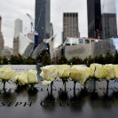 Rosas brancas num dia triste