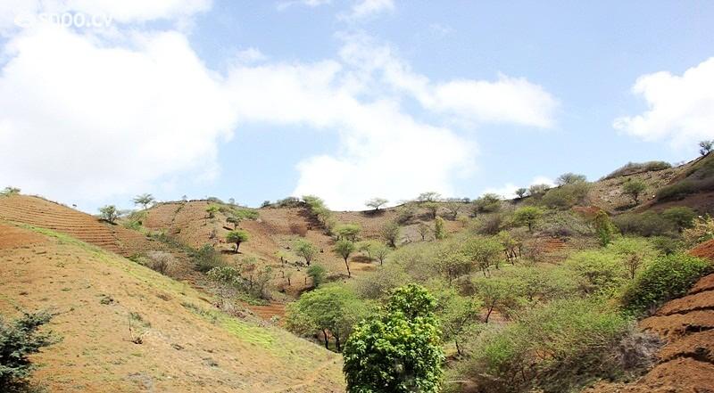 O interior da ilha é visitado por muiats pessoas nesta altura.