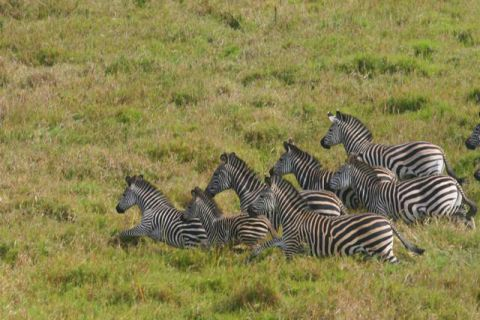 Gorongosa - O Olhar de Paul Kerrison