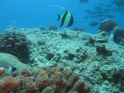 Buddies Reef