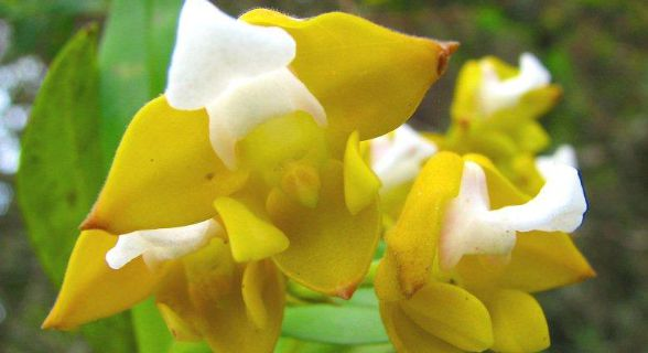 flores que podem ser vistas no Parque Nacional da Gorongosa