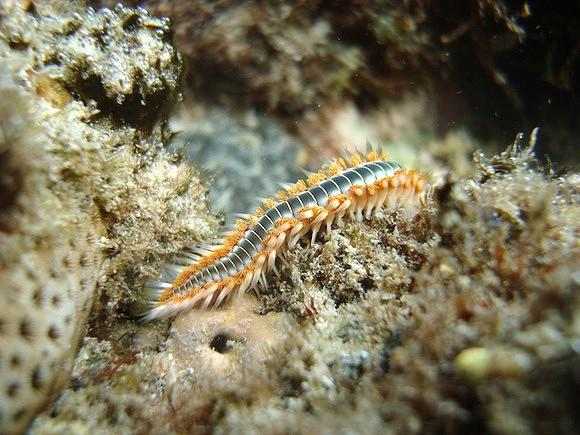 Trilha Subaquática da Baía das Gatas