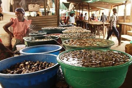 Mercado do Peixe. Venda de ameijoa e camarão.