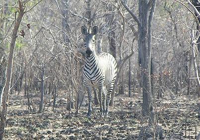Reserva Nacional do Niassa