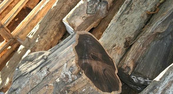 Madeira pau preto