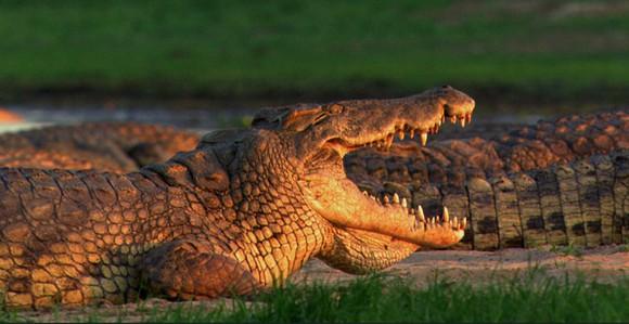 Fauna. Um pouco por todo o país existem locais fantásticos e com animais verdadeiramente selvagens. No entanto, a Gorongosa concentra num só espaço um sem número de espécies.