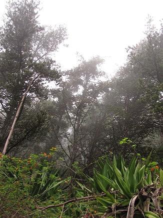 Parque Natural do Monte Gordo - S.Nicolau
