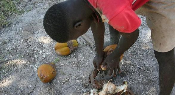 Como partir o coco