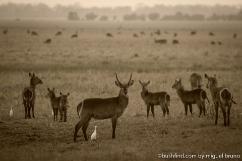 Waterbuck heaven