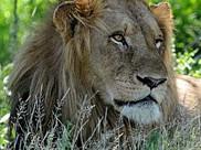A vida selvagem no Kruger Park